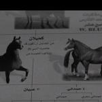 الحصان العربي- الجزيرة الوثائقية